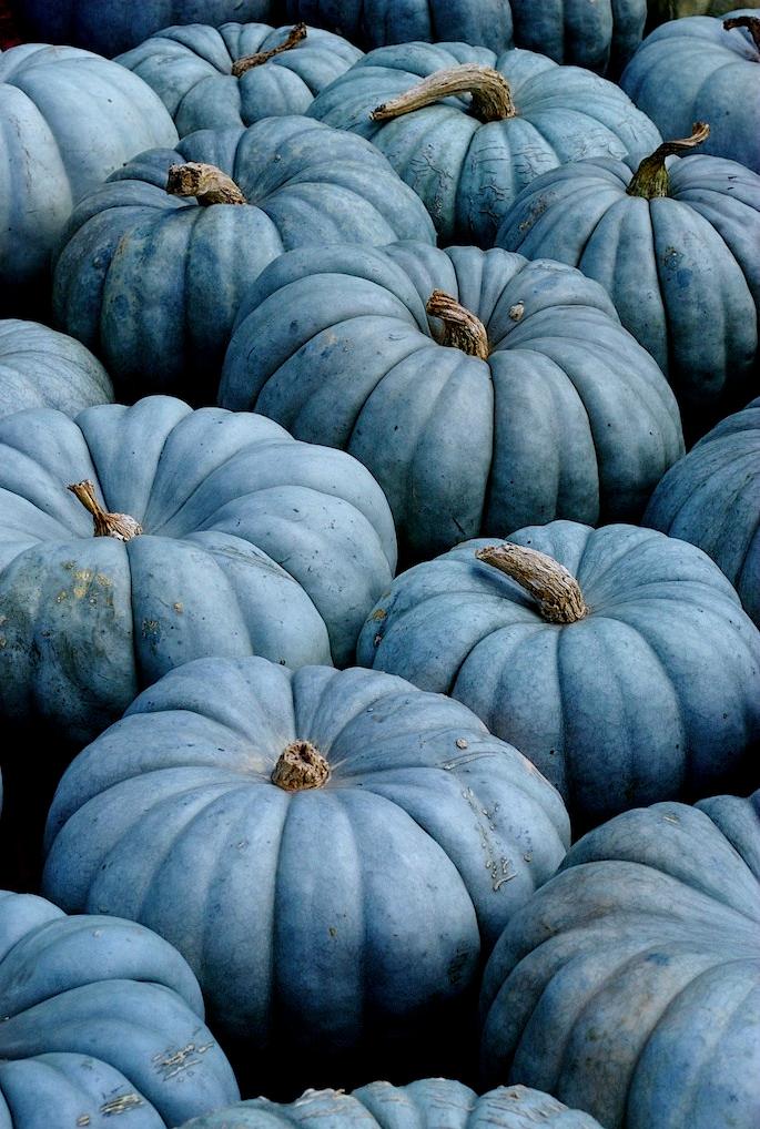 blue-pumpkins